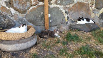 Linus, Malin och Petra