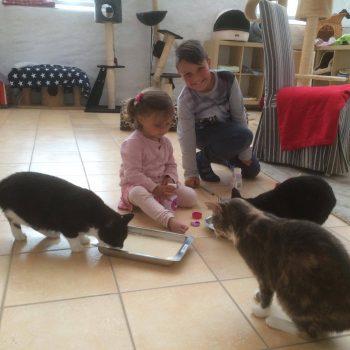 katthemmet vecka 32, besökare bjuder på kattmjölk
