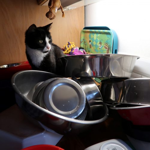 Diana hjälper till med disken!
